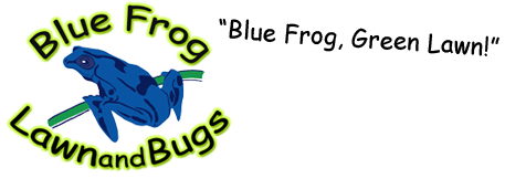 Blue Frog Lawn & Bugs